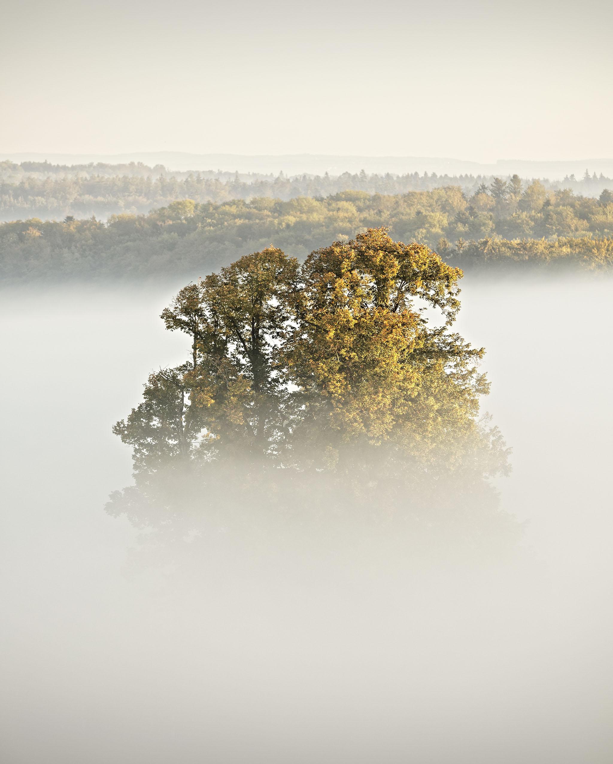 Linde LINN Nebel